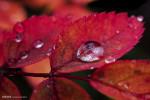 تصاویر فصل پاییز در پارک ملی دنالی