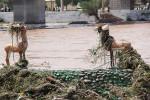 تصاویر آثار سیل در دزفول