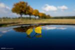 تصاویر جلوه هایی از پاییز در نقاط مختلف جهان