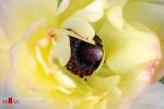 شکوفه زدن گلها، چهره بهار را زیبا می کند