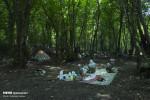 تعطیلات تابستانه ۹۸ در جنگل های گلستان