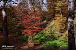 زیبایی پاییز و تصاویر طبیعت هفت رنگ در استان گلستان