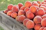 حساسیت به میوه هلو چه خطراتی را ایجاد میکند ؟