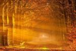 متن و جملات احساسی خداحافظی پاییز و یلدا