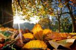 متن و فایل صوتی، دو قدم مانده که پاییز به یغما برود !