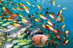 انواع غذای ماهی : هر نوع ماهی چه غذایی میخورد ؟