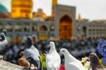 مسافرت به مشهد در عید نوروز ممنوع شد !