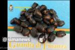 جاسازی ماهرانه کوکائین در دانههای قهوه