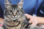 آیا گربه و موی گربه باعث نازایی میشود؟