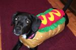 گالری عکسهای زیبا از سگ خوشگل و بانمک خانگی