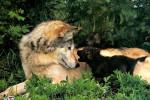 عکس های زیبا و شگفت انگیز از طبیعت و حیوانات