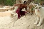 مراقبت گربه از توله هایش در مقابل مار آناکوندا