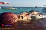 دومین نهنگی که در ساحل کیش به گل نشست
