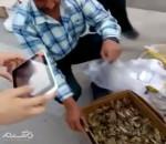 کلیپ: فروش ملخ برای خوردن در گراش استان فارس !!