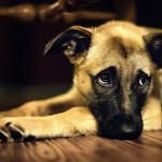 هاری،علائم سگ و گربه هار،راه تشخیص وعلل این بیماری