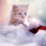 آیا گربه ها  هم ایذر( FIV ) می گیرند؟