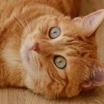 راههای درمان و تشخیص ویروس ایذر در گربه ( FIV )