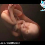 مراحل تشکیل جنین در رحم در طی 9 ماه بارداری (فیلم)