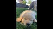 کلیپ سگ خواب آلود برای استوری اینستاگرام