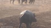 مستند راز بقا نبرد شیر و اسب آبی