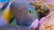روش عاج ماهی برای خوردن صدف