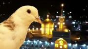 کلیپ تولدت مبارک امام رضا