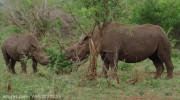 مستند حیات وحش در آفریقا