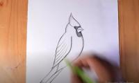 آموزش کشیدن نقاشی پرنده کاردینال