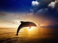 طرز تفکر دلفینی چیست؟!