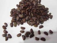 خواص هسته خرمالو : فواید دارویی و درمانی هسته میوه خرمالو