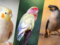 هر آنچه که در مورد استفراغ در پرندگان باید بدانید!!