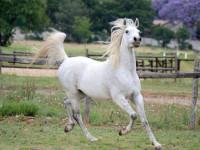 روش های مراقبت از اسب پس از سوارکاری