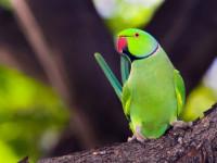 آشنایی با انواع بیماری در پرندگان زینتی