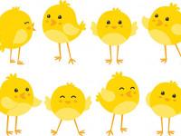 چگونه جوجه مرغ بی حال را درمان کنیم ؟