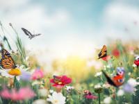 تعبیر خواب گل:  70  تعبیر دیدن خواب گل (مصنوعی و طبیعی)
