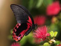 شعر با واژه پروانه | 38 شعر زیبا و کوتاه در وصف پروانه و پروانه شدن