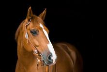 آشنایی با طرح توجیهی پرورش اسب