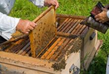 آشنایی با اصول پرورش زنبور