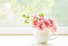 بهترین گیاهان برای مطب پزشک کداماند؟