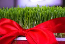 ۱۳ تصویر با کیفیت از سبزه هفت سین نوروز