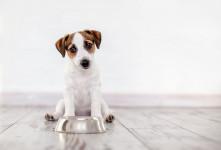 علت یبوست سگ چیست؟