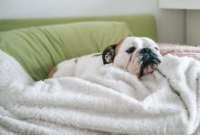 دل پیچه و درد معده در سگ ها چه علائمی دارد ؟