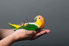 ۱۰ ماده غذایی که باعث مسموم شدن پرنده می شود
