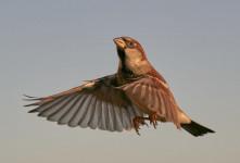 شکار و کشتن کدام حیوان و پرندگان مکروه است و جایز نیست ؟