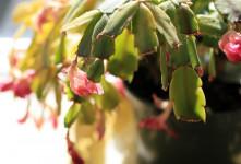 عوارض آبیاری زیاد گیاهان