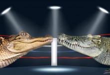 فرق تمساح با کروکودیل در چیست ؟