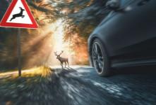 تست گوزن یا تست موس (moose) خودرو چیست ؟