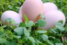 تخم مرغ گیاهی چیست ؟