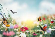 تعبیر خواب گل:  ۷۰  تعبیر دیدن خواب گل (مصنوعی و طبیعی)
