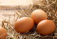 پسر تخم گذاری که تاکنون ۲۰ تخم گذاشته است+ عکس